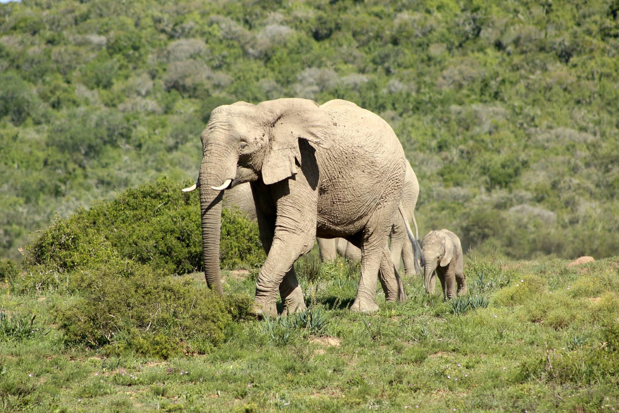 volunteer with elephants